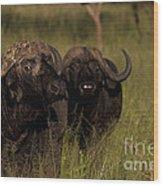 Cape Buffalo   #6884 Wood Print