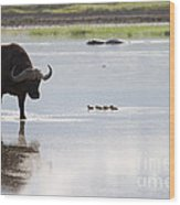Cape Buffalo And Baby Eygptian Geese   #0375 Wood Print