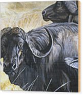 Da206 Cape Buffalo By Daniel Adams Wood Print