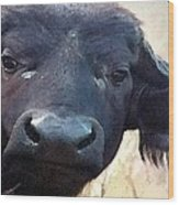 Cape Buffalo Up Close And Personal Wood Print