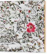 Cape Cod Beach Rose In Fresh Snow Wood Print