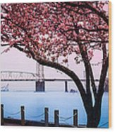 Cape Fear Of Wilmington Wood Print