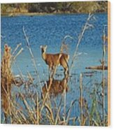 Cape Hatteras Deer In Pond 3 11/22 Wood Print