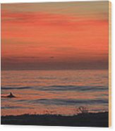 Cape Hatteras Dolphin 2 Wood Print