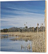 Cape May Marshes Wood Print