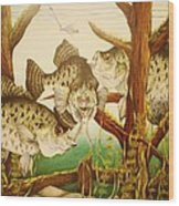 Captivating Crappies Wood Print