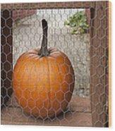 Captive Pumpkins Wood Print
