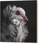 Capuchin Pigeon Wood Print