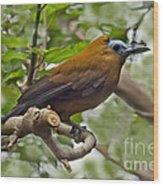 Capuchinbird Wood Print