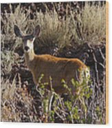 Capulon Doe Wood Print by Charles Warren