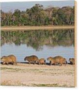 Capybara By A Lake Wood Print