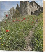 Carcassonne Poppies Wood Print by Robert Lacy