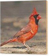 Cardinal - Male 1 Wood Print