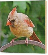 Cardinal 103 Wood Print