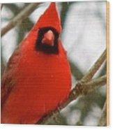 Cardinal 104 Wood Print