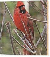 Cardinal 123 Wood Print