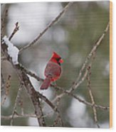 Cardinal - A Winter Bird Wood Print
