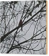 Cardinal Amongst The Branches Wood Print