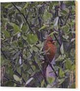 Cardinal At Dawn Wood Print
