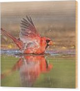 Cardinal Bath 3 Wood Print