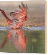 Cardinal Bath 4 Wood Print