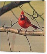 Cardinal Beauty Wood Print