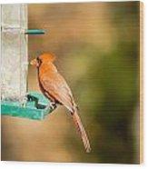 Cardinal Bird At Bird-feeder Wood Print