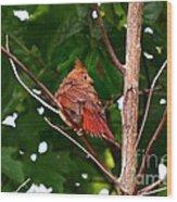 Cardinal Bird Baby Wood Print