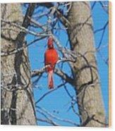 Cardinal Bird  Wood Print