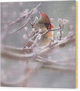 Cardinal - Bird - Lady In The Rain Wood Print