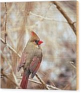 Cardinal Birds Female Wood Print