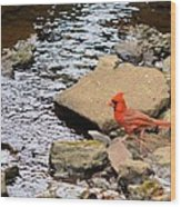 Cardinal By The Creek Wood Print