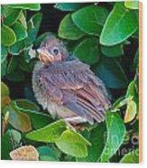 Cardinal Chick Wood Print