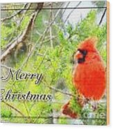 Cardinal Christas Card Wood Print