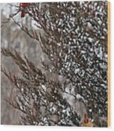 Cardinal Couple In Evergreen Wood Print