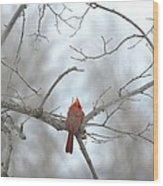 Cardinal Delight Wood Print