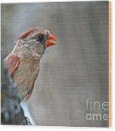 Cardinal Eye Wood Print
