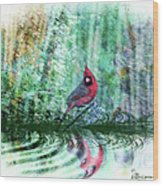 Cardinal - Featured In Comfortable Art-wildlife-and Nature Wildlife Groups Wood Print