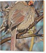 Cardinal Female Wood Print