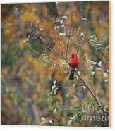 Cardinal In Autumn Wood Print