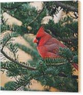 Cardinal In Balsam Wood Print