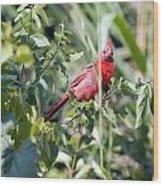Cardinal In Bush I Wood Print