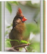 Cardinal In Dogwood Wood Print