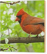Cardinal In Red Wood Print