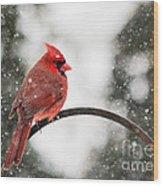 Cardinal In Snow Wood Print by Jinx Farmer