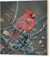 Cardinal In The Berries Wood Print