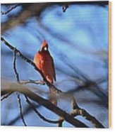 Cardinal In The Midst Wood Print