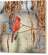 Cardinal In The Pokeberries Wood Print