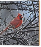 Cardinal In The Rain   Wood Print