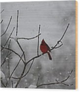 Cardinal In The Snow Wood Print